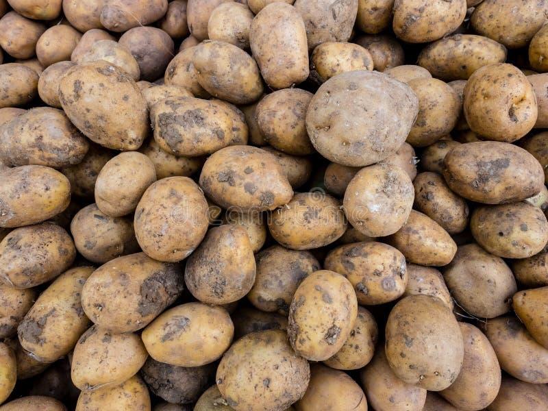 Свежие органические клубни картошки на рынке фермеров Предпосылка картошек конца-вверх стоковая фотография
