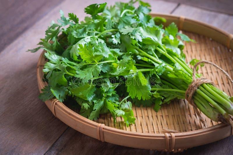Свежий кориандр, листья cilantro на корзине стоковая фотография