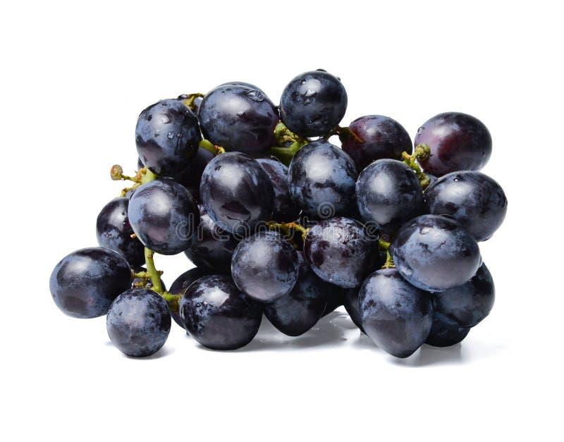 Свежий пук черных виноградин Предпосылка изолированная белизной Конец-вверх стоковая фотография