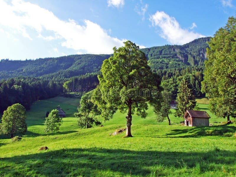Сельские традиционные фермы архитектуры и поголовья на наклонах Alviergruppe и в долину Рейна стоковое изображение rf