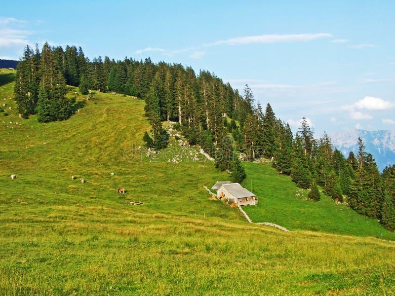 Сельские традиционные фермы архитектуры и поголовья на наклонах горной цепи Alpstein и в долину Thur реки стоковые фотографии rf