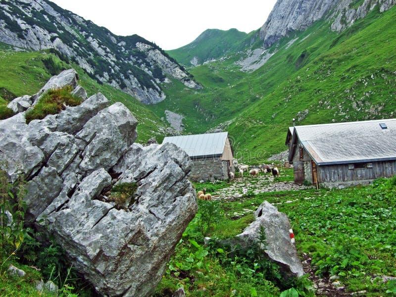 Сельские традиционные фермы архитектуры и поголовья на наклонах горной цепи Alpstein и в долину Thur реки стоковое фото