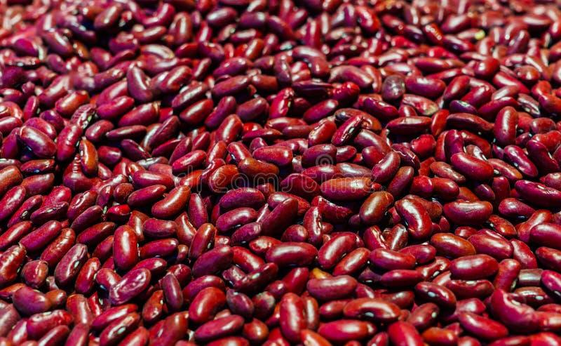 Семена красных фасолей Пища растительного происхождения протеина диетпитание здоровое стоковое фото