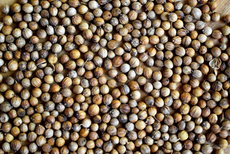 Семена кориандра кладя на деревянную доску стоковые изображения rf