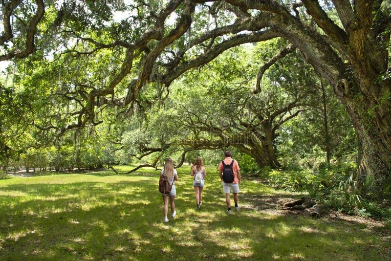 Семья наслаждаясь временем совместно в красивом парке на утре лета стоковое фото rf
