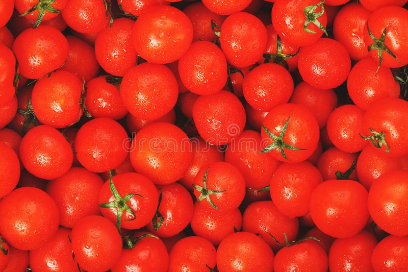 Серии свежих зрелых томатов с падениями росы Предпосылка конца-вверх с текстурой красных сердец с зелеными кабелями вишня свежая стоковое изображение