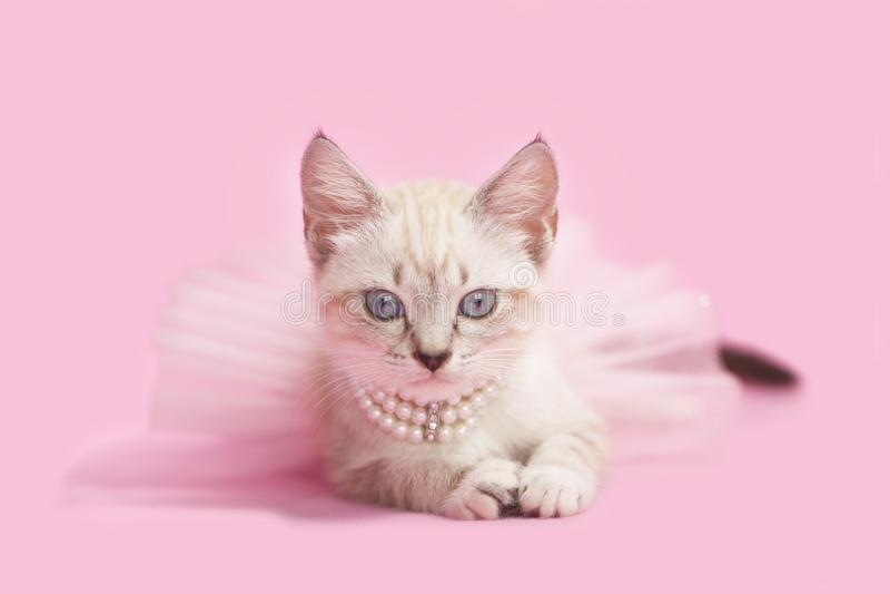 Сиамская игра котенка одевает принцессу стоковые фотографии rf