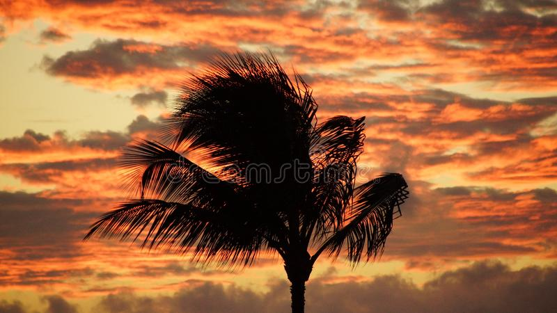 Силуэт пальмы с предпосылкой захода солнца стоковое фото rf