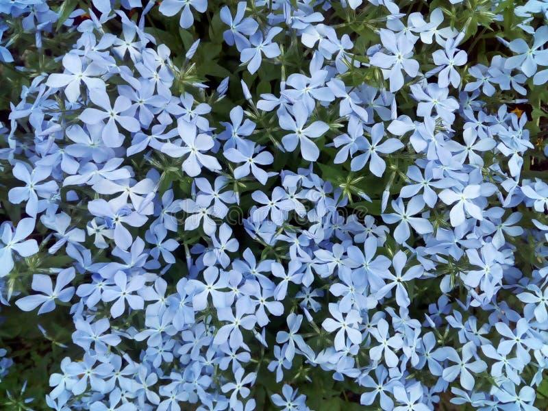 Flower, spring, nature, flowers, blue, plant, crocus, violet, garden, flora, beaut. Flower, spring, nature, white stock photography