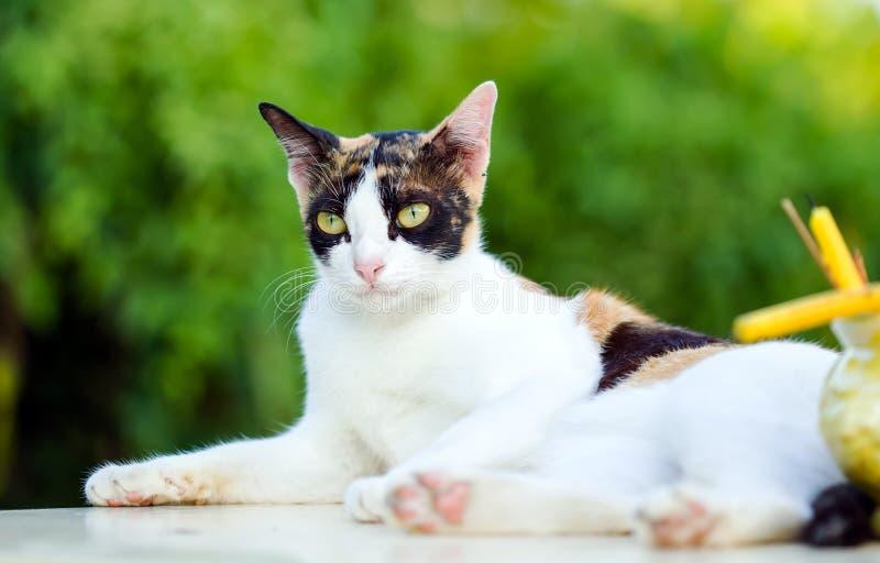 Сидение на корточках кота ослабленное на белой мраморной таблице стоковое фото rf