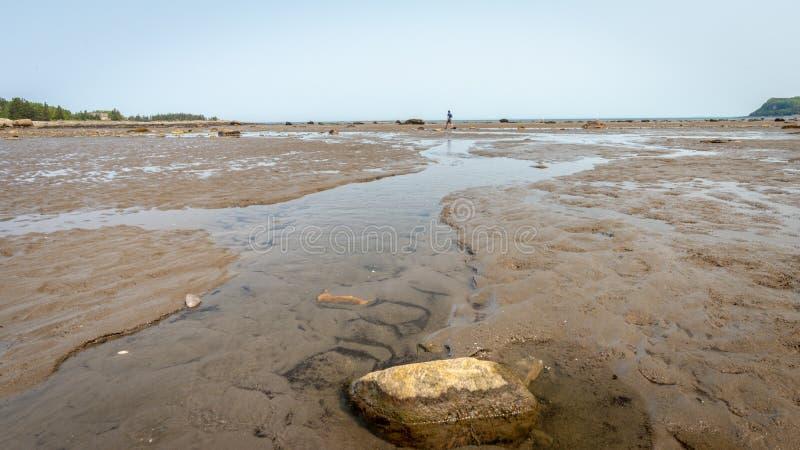 Сиротливый ходок во время отлива в Parc Национальн du Bic стоковое фото rf