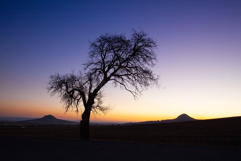 Сиротливое дерево в центральных богемских нагорьях, чехия стоковое изображение rf