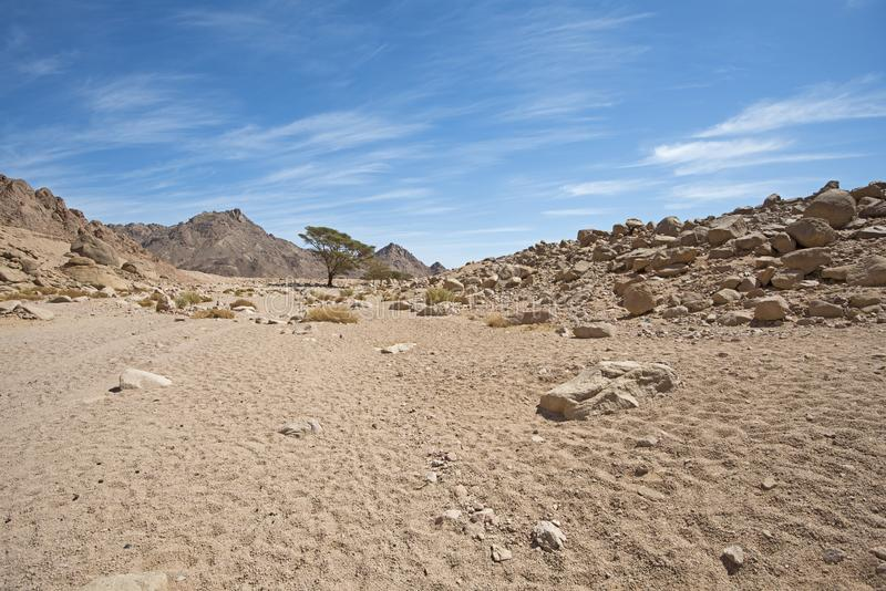 Скалистая панорама ландшафта пустыни с расти дерева акации стоковое фото rf