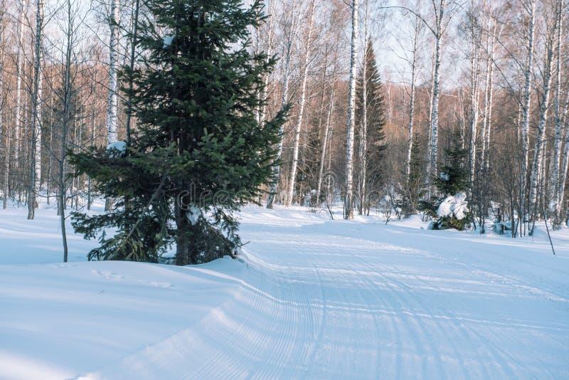 След лыжи в лесе Traasa в лесе зимы дорога для идти до лес Taiga зимы в зиме следы стоковые изображения rf