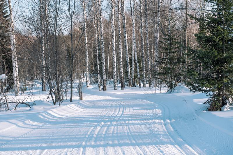 След лыжи в лесе Traasa в лесе зимы дорога для идти до лес Taiga зимы в зиме следы стоковая фотография