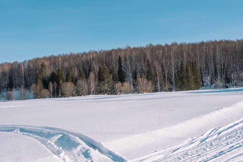 След лыжи в лесе Traasa в лесе зимы дорога для идти до лес Taiga зимы в зиме следы стоковое фото rf