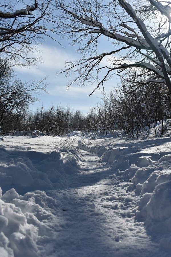 След через снежный лес стоковые изображения rf