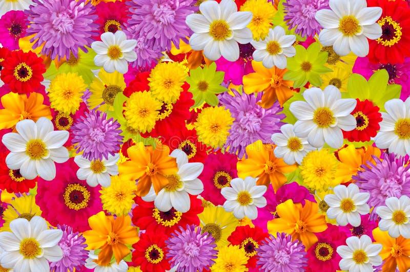Смешивание ярких цветов, безшовная предпосылка стоковые изображения