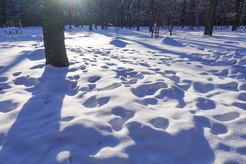 Смещения и следы ноги снега в снеге день солнечный зима белизны снежинок предпосылки голубая стоковое изображение