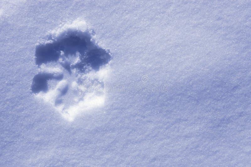 Снежинка в снежке стоковое фото