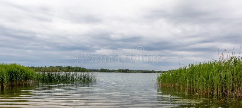 Спокойный взгляд лета озера Латви с отражением облаков и тростников на поверхности воды стоковое изображение rf