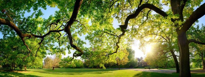 Спокойный панорамный пейзаж в красивом парке стоковые изображения rf