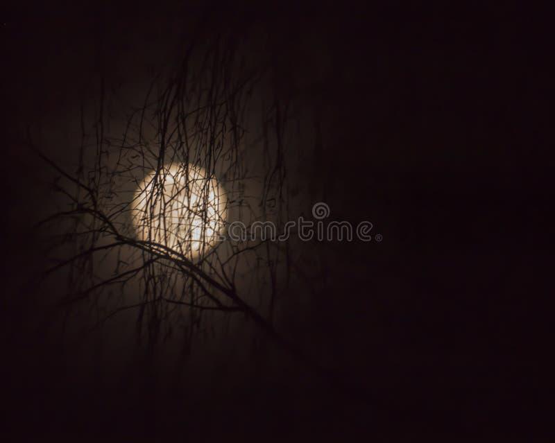 Супер луна 19 02 2019 Участок луны луны полностью стоковая фотография
