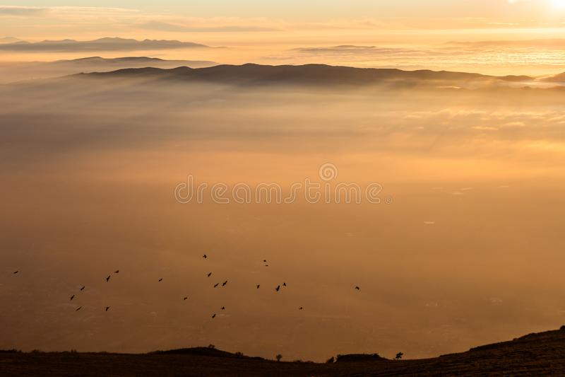 Стадо птиц летая над морем тумана на заходе солнца стоковая фотография rf