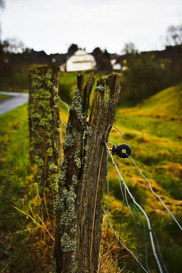 Старая загородка перерастанная с мхом после дождя стоковые фото