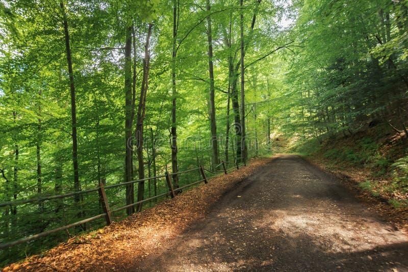 Старая дорога гравия через лес бука стоковые изображения rf