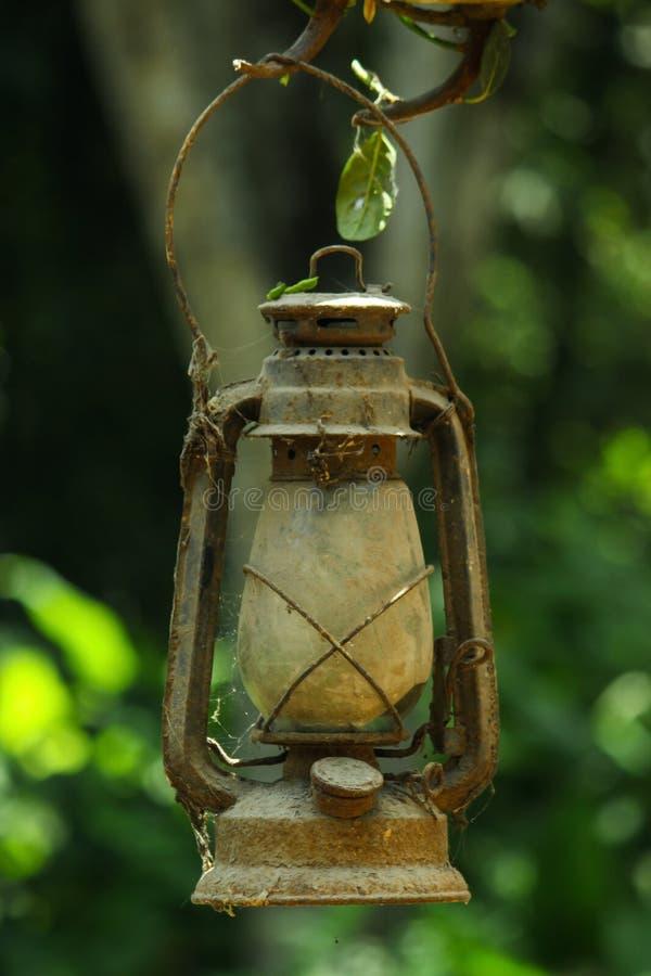 Старый фонарик висит от ветви в лесе стоковая фотография rf