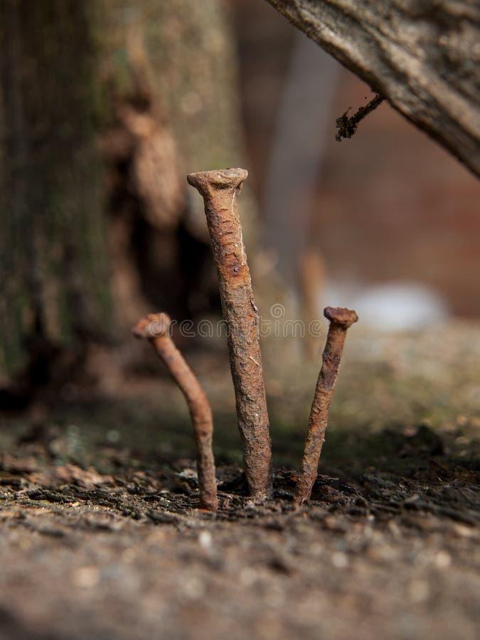 3 старых ржавых ногтя стоковые фотографии rf