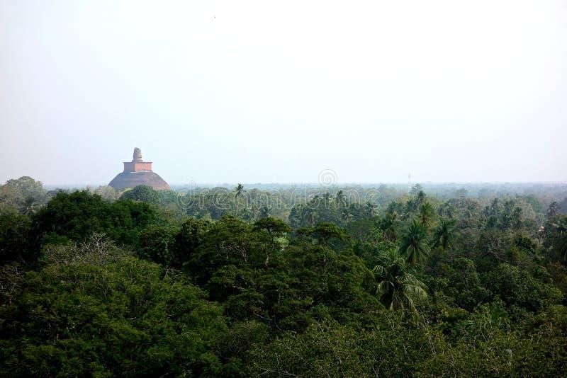 Старое буддийское Stupa прокалывая сень джунглей стоковые изображения