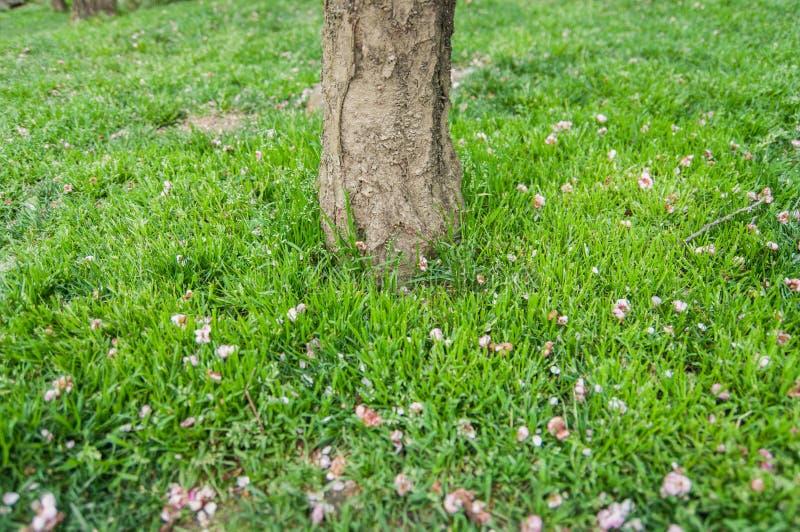 Ствол дерева на лужайке стоковые изображения