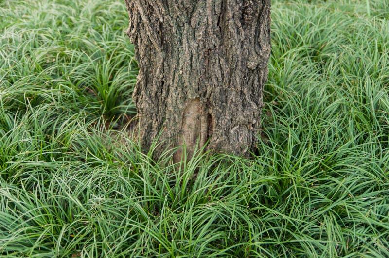 Ствол дерева на лужайке стоковые фото