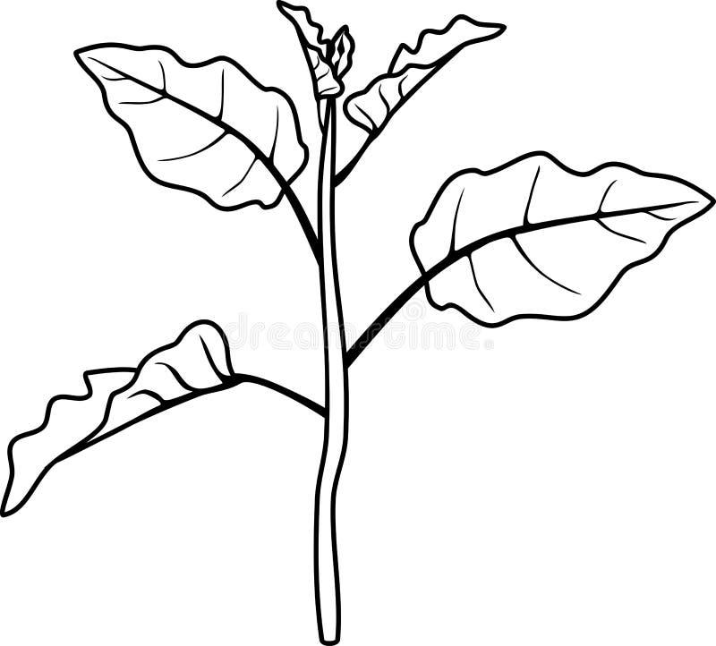 Страница расцветки Стержень баклажана с листьями иллюстрация штока
