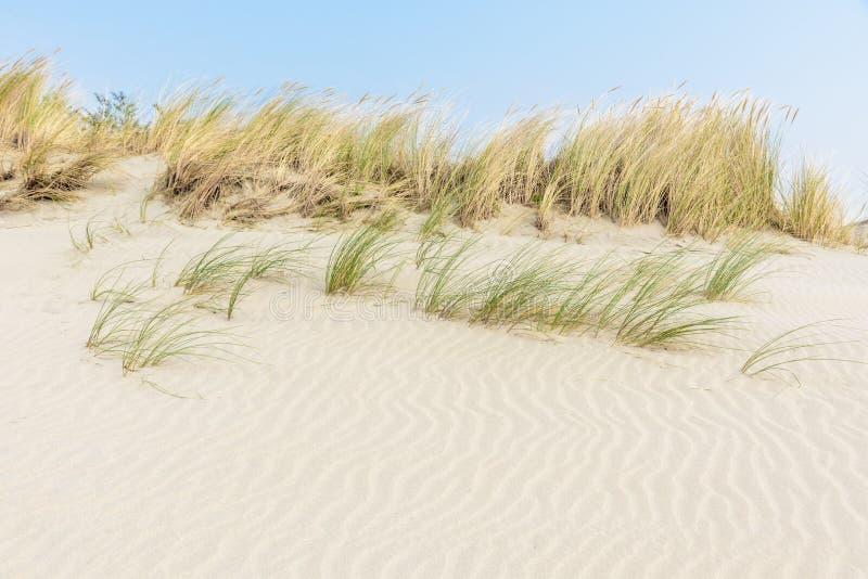 Струят белые песчанные дюны с травой marram под голубым небом стоковое изображение rf