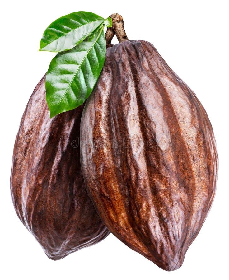Стручки какао с листьями какао на белой предпосылке Путь клиппирования стоковое изображение