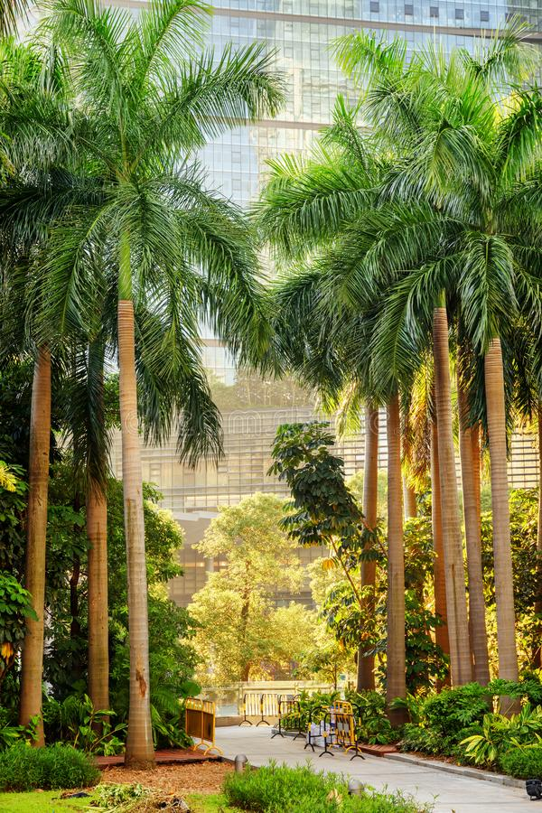 Сценарная дорожка среди зеленых деревьев на современной строя предпосылке стоковая фотография