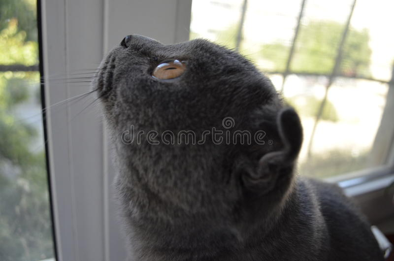 Ð¡at looking out the window stock images