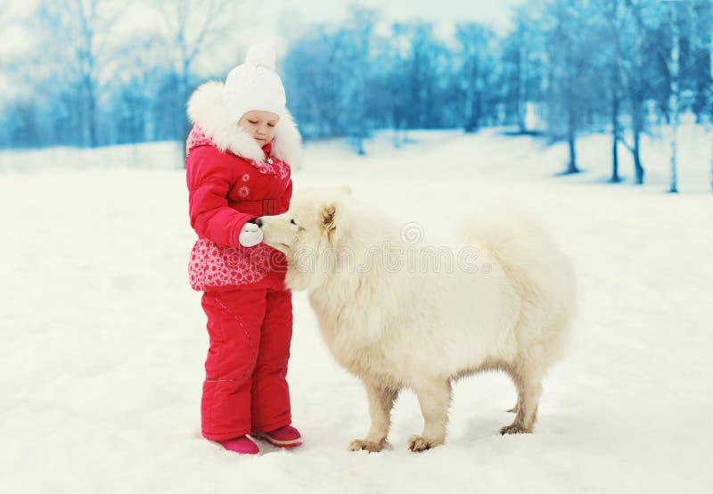 сhild feeding white Samoyed dog in winter royalty free stock photos