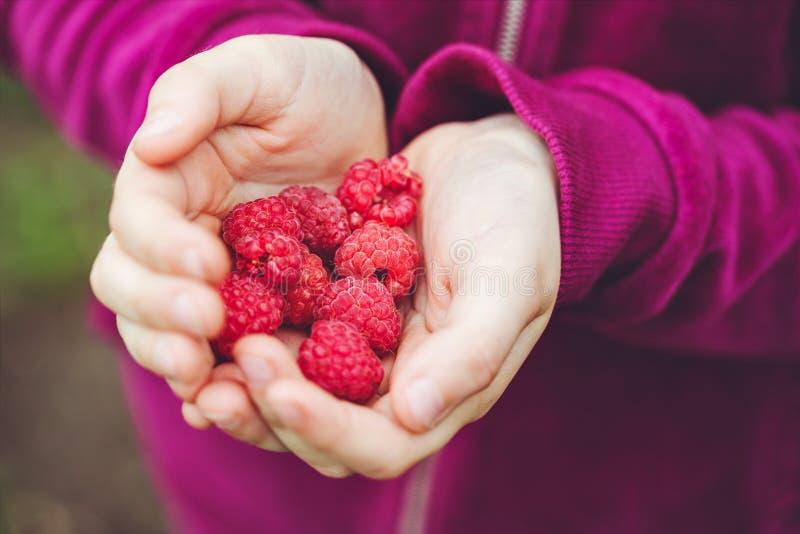 Ð¡hild holds a fresh red raspberries. stock image