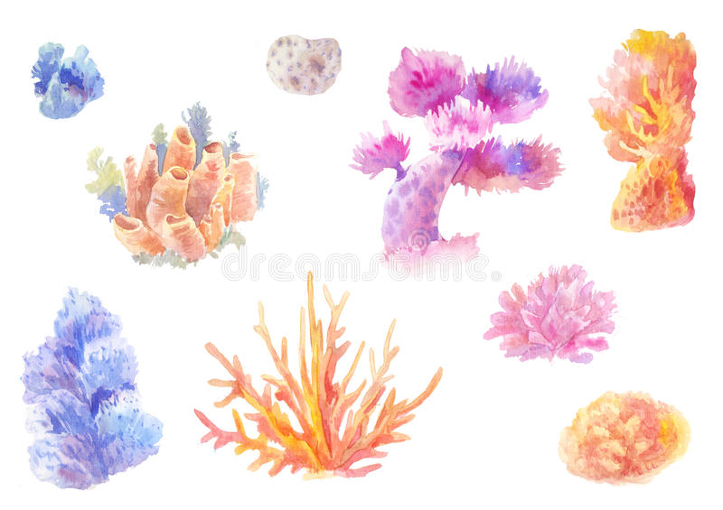 Сoral reef in watercolor. Set of hand-drawn seaweed stock illustration