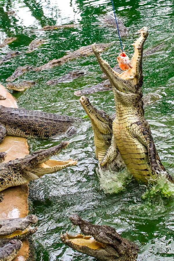 Dangerous reptiles with sharp teeth stock images