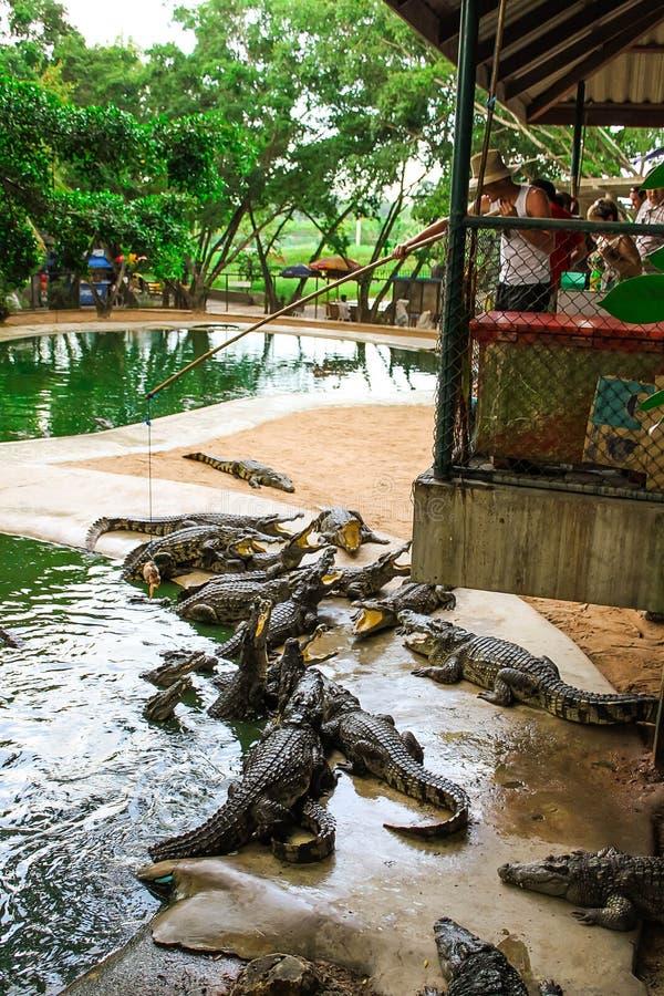 Dangerous reptiles with sharp teeth stock photo