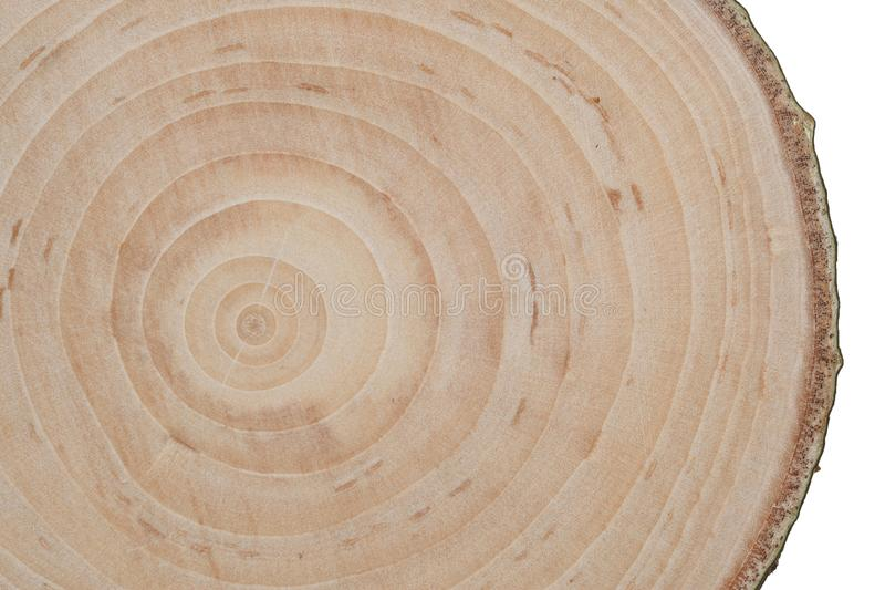 Сross cut wood texture royalty free stock photos