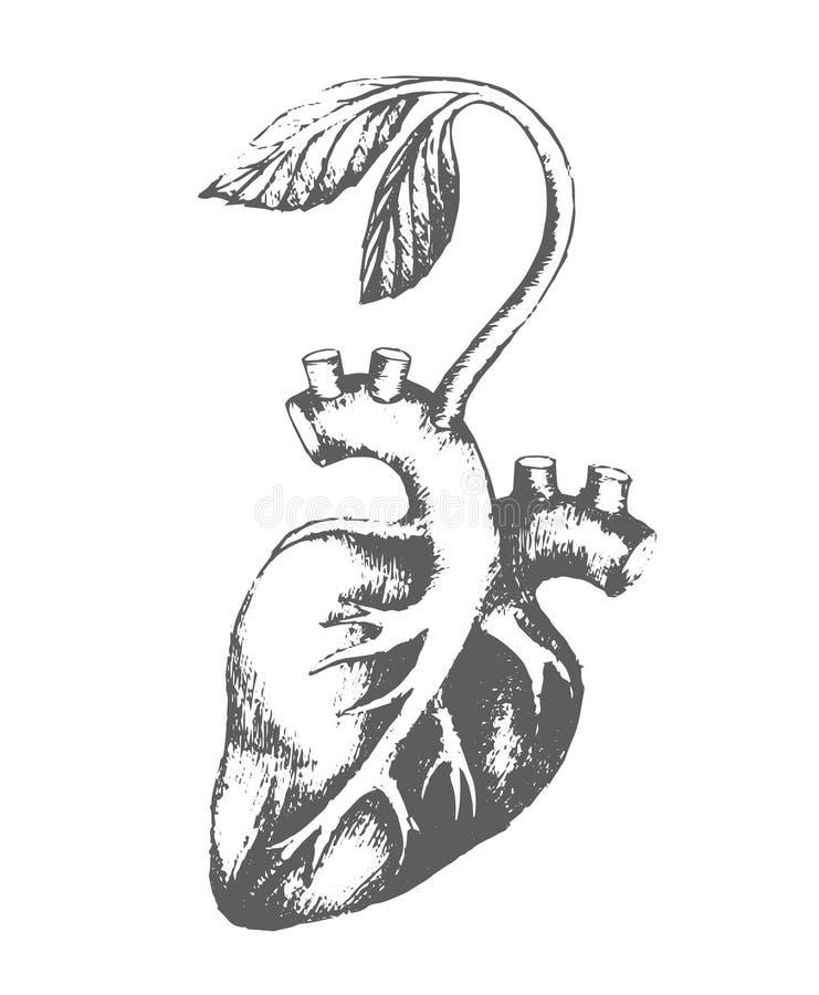 Эскиз руки вектора вычерченный сердца с иллюстрацией ростка на белой предпосылке бесплатная иллюстрация