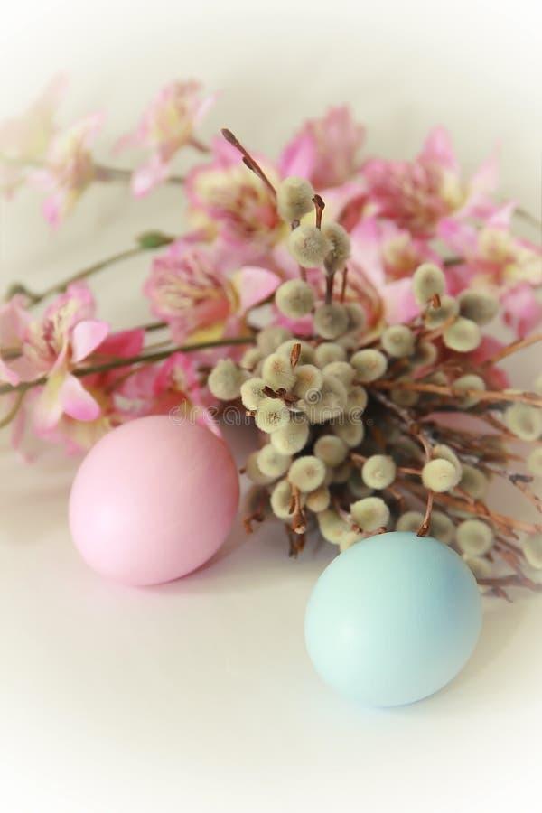 Яйца пинка желтые голубые против предпосылки вербы и цветков на праздник пасхи стоковое фото rf