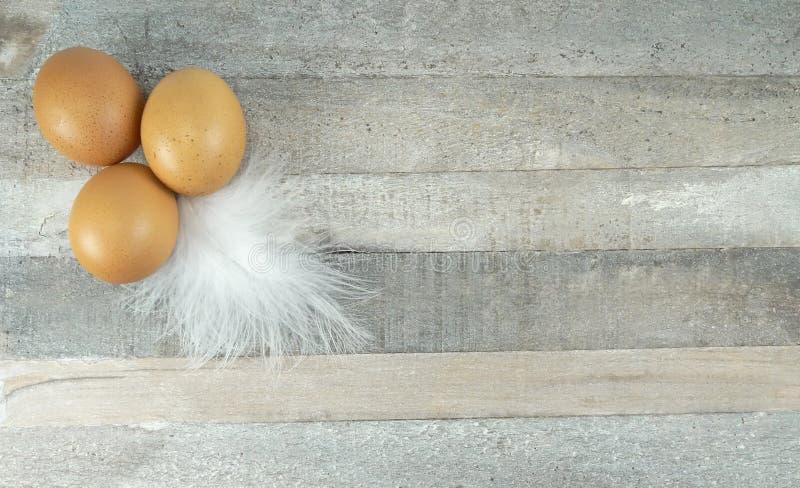Яйца цыпленка Брауна с пером на деревянной предпосылке стоковые фотографии rf