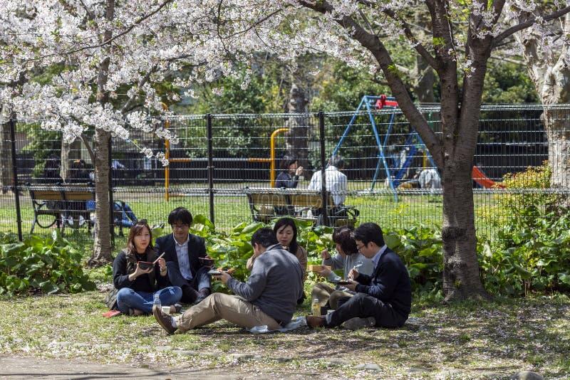 Япония, Токио, 04/12/2017 Компания друзей имеет обед в парке стоковые фотографии rf